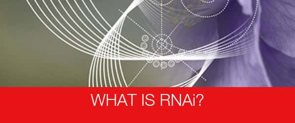 What is RNAi?