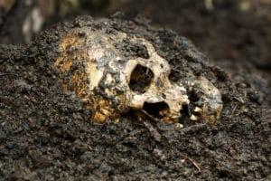 skull-in-mud