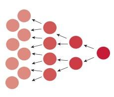 sho-cell-proliferation-s007844