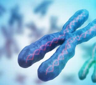 Chromothripsis is a process where a single catastrophic event shatters a chromosomal region, and the repair incpororates hundreds of mutations.