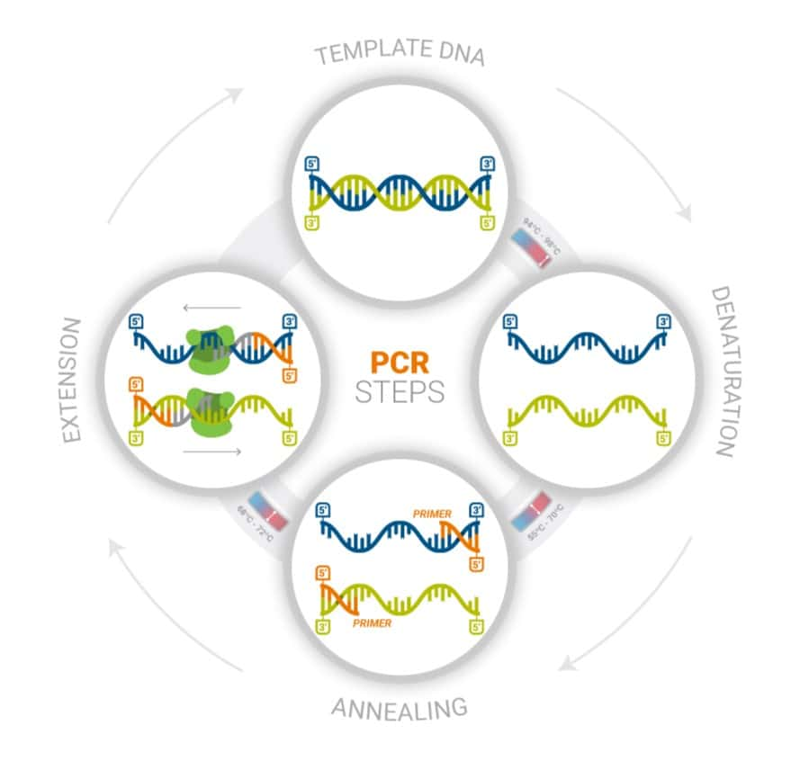 A graphic shows the steps of PCR