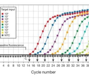 qPCR curves on a graph