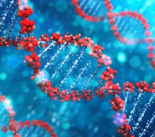 DNA. Image: Leigh Prather/Shutterstock.com