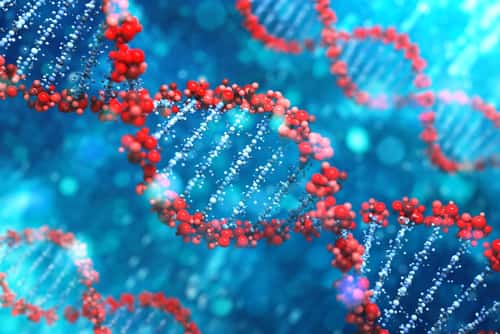 DNA. Image: Leigh Prather/Shutterstock.com