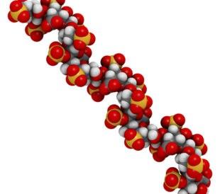 Heparin chemical structure. Image: molekuul.be/Shutterstock.com