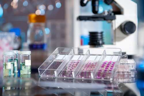 Plastic tray of histological tissue samples next to a microscope. Image: anyaivanova/Shutterstock.com.