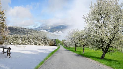 Winter and summer changing season, weather concept with road. Image: Michal Bellan/Shutterstock.com.