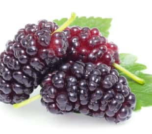 Antioxidants Polyphenolic Content of Mulberries