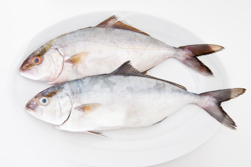 Two white amberjack Seriola dumerili raw on a white plate, isolated on a white background