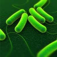 3d rendered close up of coli bacteria