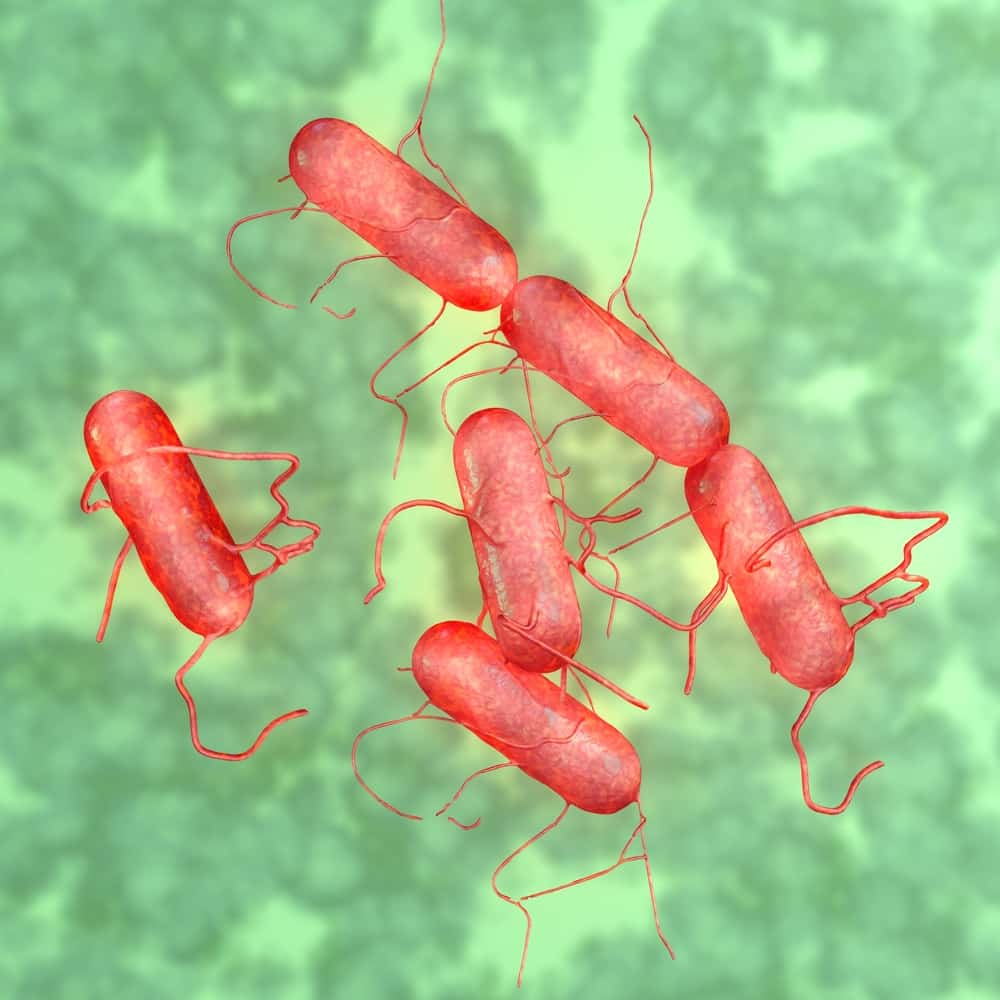 Red Salmonella bacteria on a green background