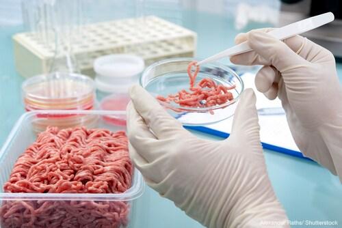 Foodborne pathogen testing beef