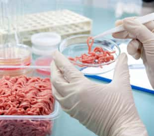 Food quality control expert inspecting at meat specimen in the laboratory. Image: Alexander Raths/Shutterstock.com.