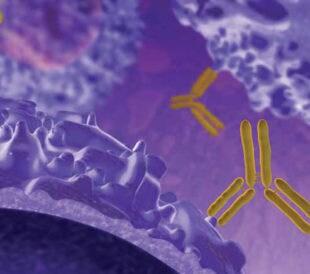 幹細胞研究用抗体
