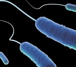 ecoli-genotype-title