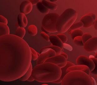 ABO式血液型遺伝子の発現調節機構を解明する