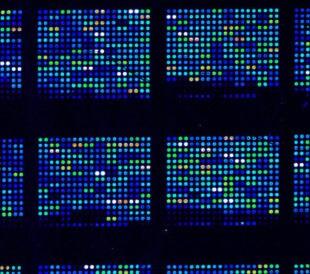 start-microarray-title