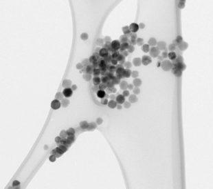 Bright field TEM image of iron oxide quantum dots