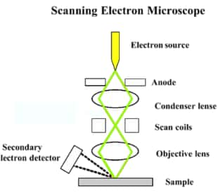 Basic components of an SEM
