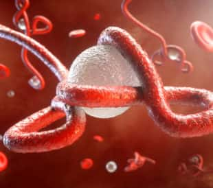Ebola Virus Attacking a Cell