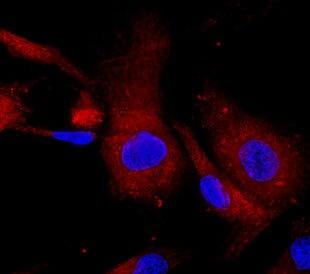 Stem cells. Image: Vshivkova/Shutterstock.com