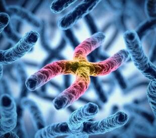 X chromosome. Image: koya979/Shutterstock.com