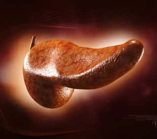 Pancreas. Image: Liya Graphics/Shutterstock.com