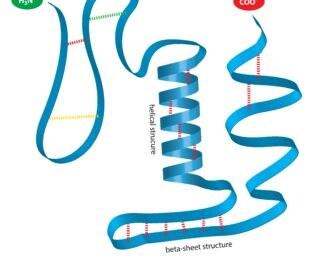 Protein structure. Image: magnetix/Shutterstock.com
