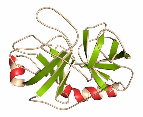 Trypsin digestive enzyme. Image: molekuul.be/Shutterstock.com