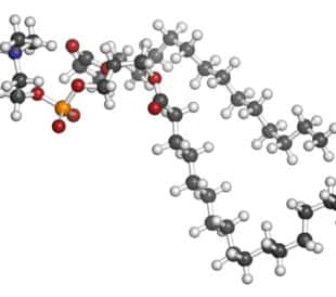 Pulmonary surfactant molecule. Chemical structure of dipalmitoylphosphatidylcholine (DPPC) the major constituent of lung surfactant. Atoms are represented as spheres with conventional color coding. Image: molekuul_be/Shutterstock.com.