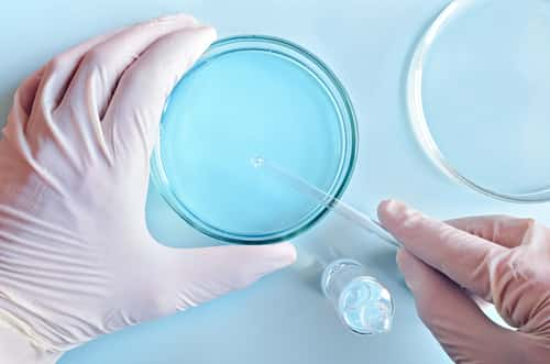 Chemical research in Petri dishes on blue background. Researcher preparing color plates in a microbiology laboratory. Hand of a technician inoculating plates. Top view. Daylight. Image: Stanislav Salamanov/Shutterstock.com.