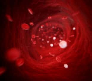 3d rendered illustration - human blood cells. Image: Sebastian Kaulitzki/Shutterstock.com.