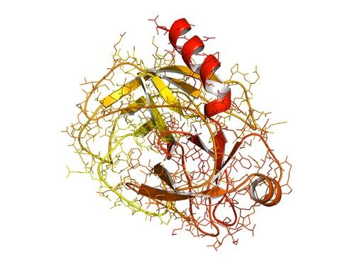 trypsin ribbon diagram
