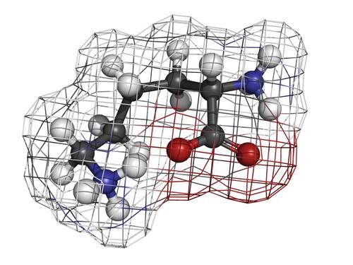 Lysine. Image: molekuul.be/Shutterstock.com