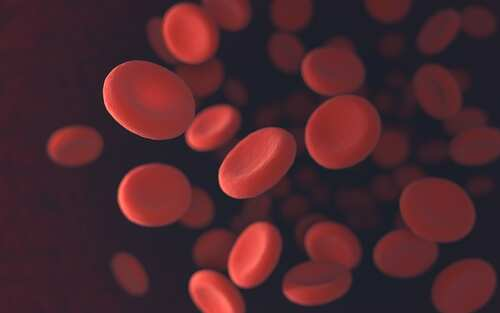 Blood cells. Image: ktsdesign/Shutterstock.com
