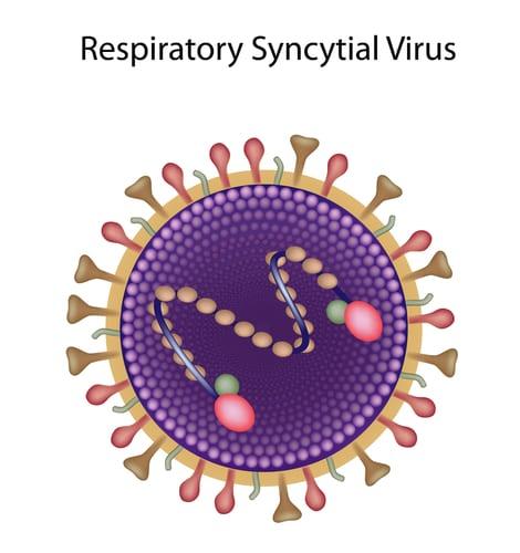 Respiratory Syncytial Virus. Image: Alila Medical Media/Shutterstock.com