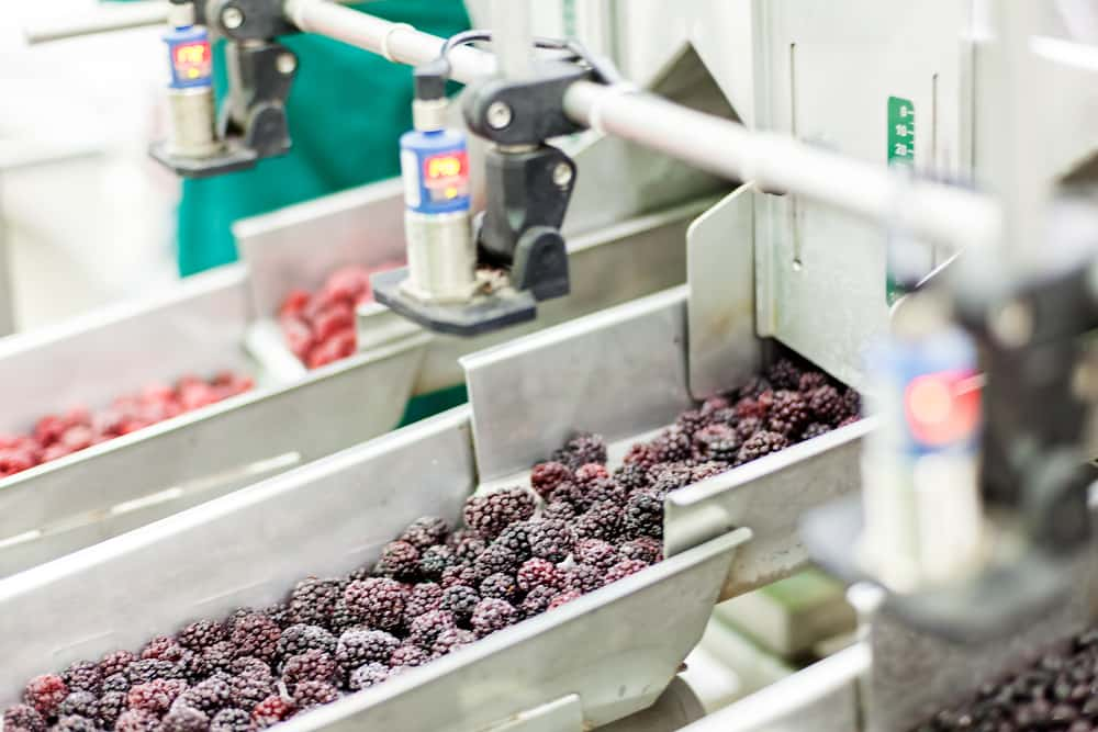 Frozen berries in sorting and processing machines