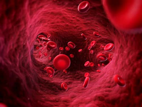 3-D rendering of blood cells in a vein. Image: Sebastian Kaulitzki/Shutterstock.com