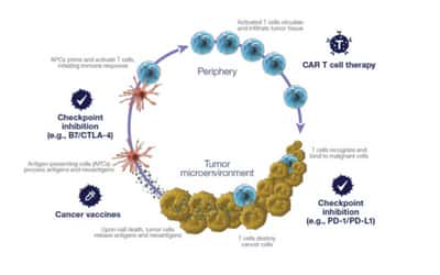 3 Promising Areas of Immuno-oncology - Life in the Lab