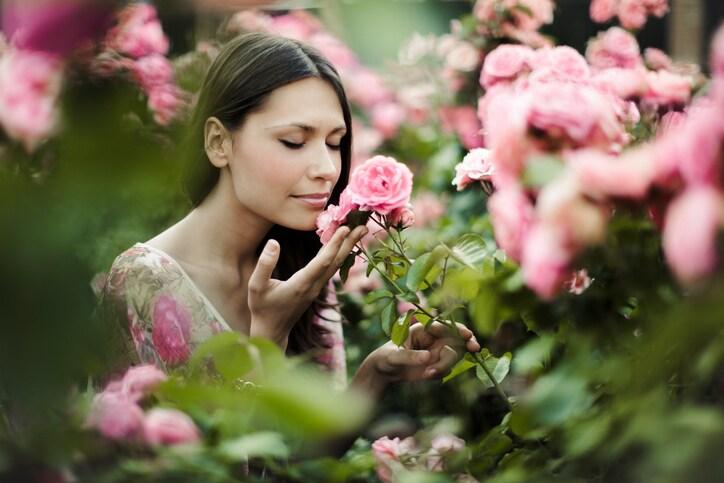 smell rose