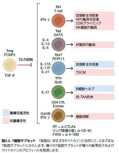 T細胞サブセット
