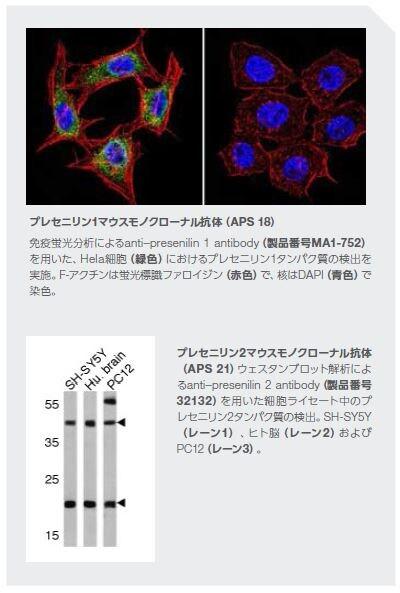 プレセニリン1マウスモノクローナル抗体(APS 18)