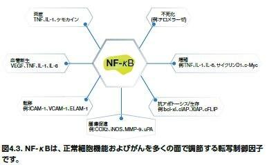 NF-κBは、正常細胞機能およびがんを多くの面で調節する転写制御因子です。