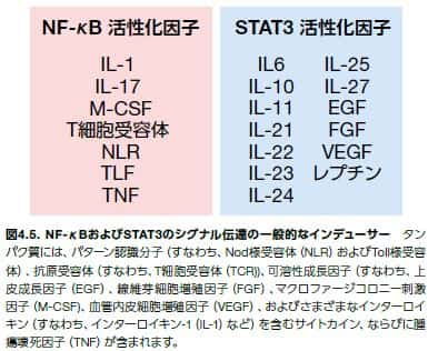 NF-κBおよびSTAT3のシグナル伝達の一般的なインデューサー