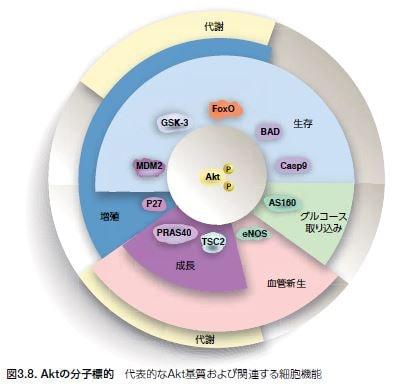 Aktの分子標的