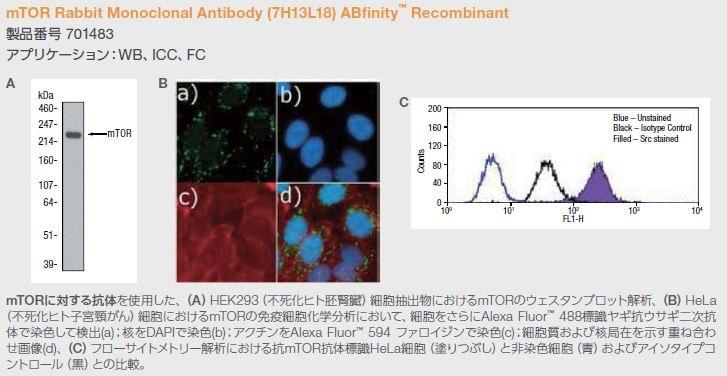 mTOR Rabbit Monoclonal Antibody (7H13L18) ABfinity™ Recombinant