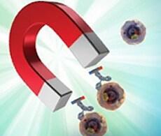 MagniSort Cell Separation kits