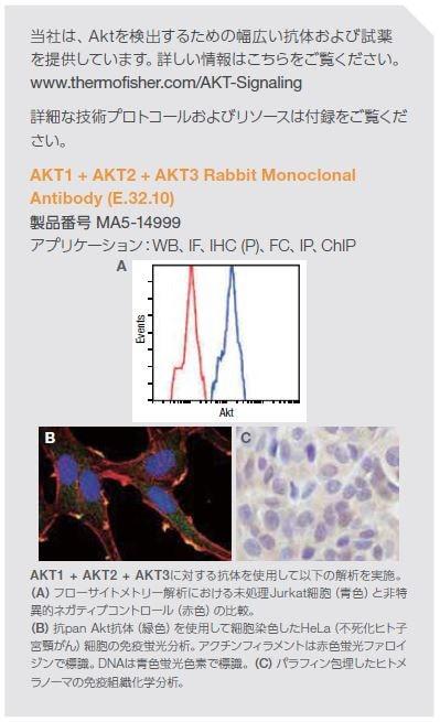 AKT1 + AKT2 + AKT3に対する抗体を使用した例