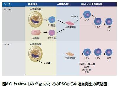 in vitro および in vivo でのPSCからの造血発生の概略図