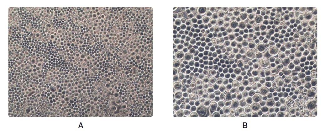 cell-morphology-basic-fig4